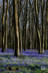Micheldever Woods, Hampshire