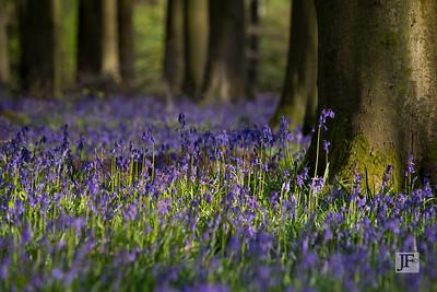Micheldever Woods, Hampshire