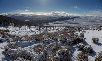 Alvie Estate, Cairngorms