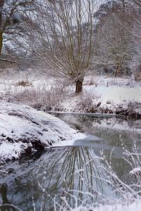 Winter branch reflection