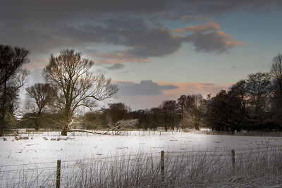 Snow field dawn