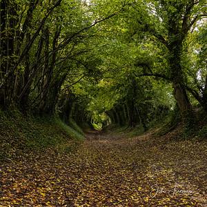 Tree tunnel, Halnaker
