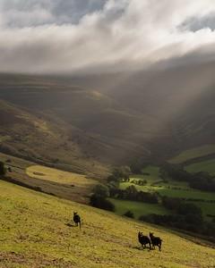 Welsh wanderers