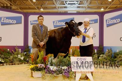 UK Livestock British Friesen15