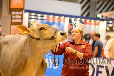 UK Livestock Brown Swiss 2015