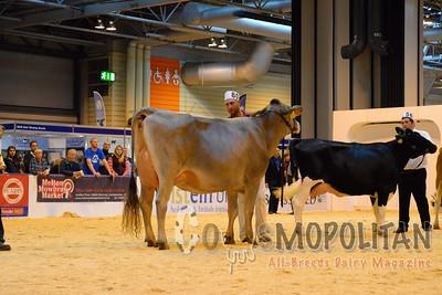 UK Livestock Interbreed 2015