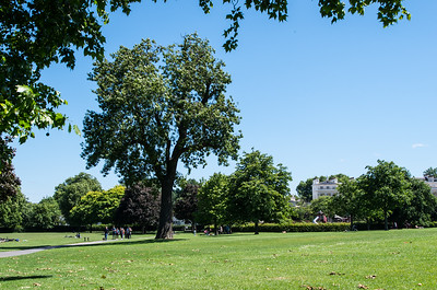 A summer day at the Regent's Park