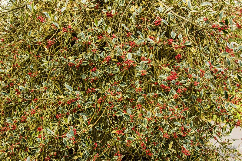 Kew Dec  2017-41