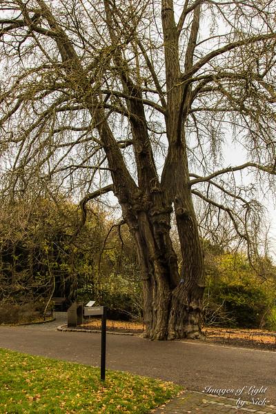 Kew Dec  2017-20