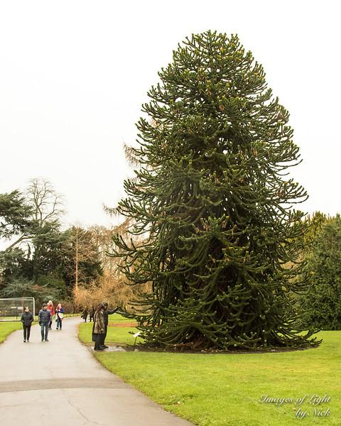 Kew Dec  2017-22
