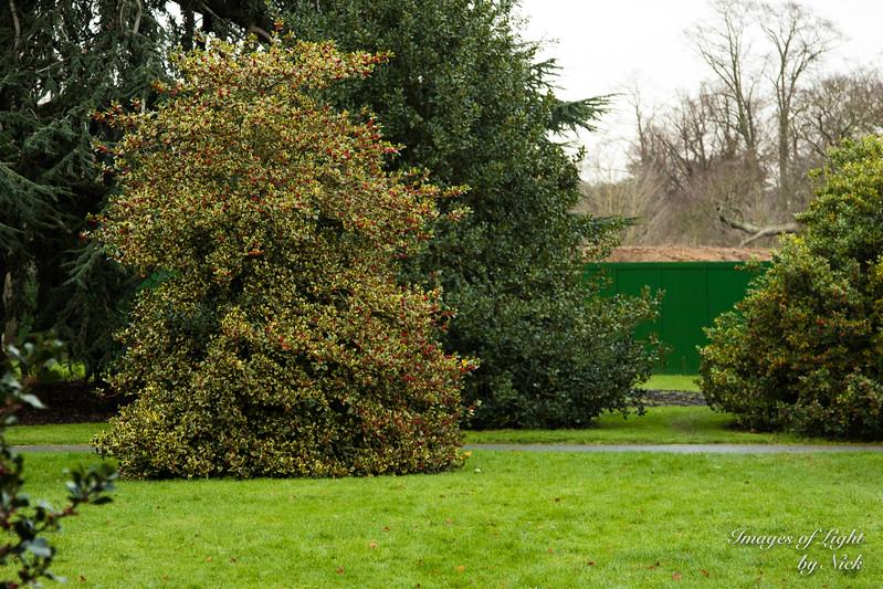 Kew Dec  2017-45