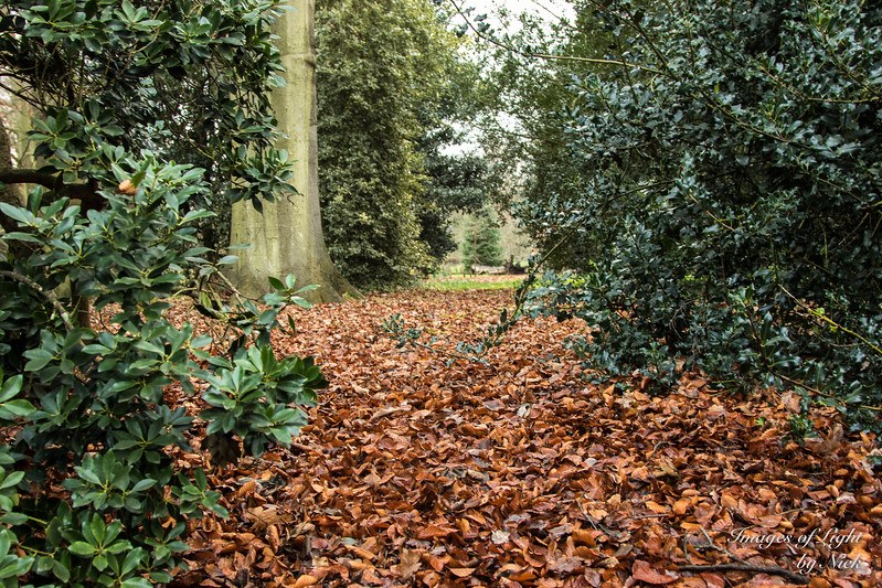 Kew Dec  2017-44