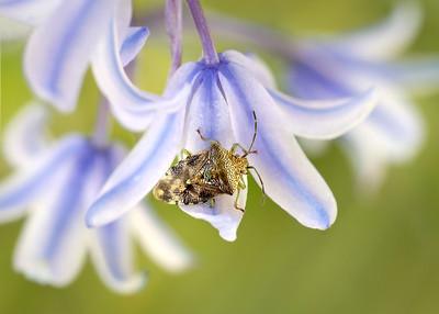 Parent Bug