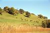 Chiltern Hills Turville Buckinghamshire England