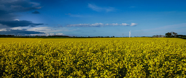 Blue and Yellow - Fife Scotland