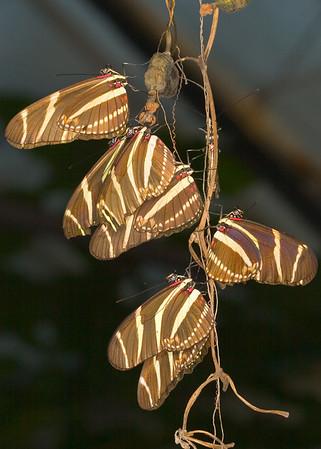 Butterflies Centre, London, UK