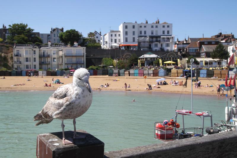 Closeup seagull at Viking Bay Broadstairs Kent England
