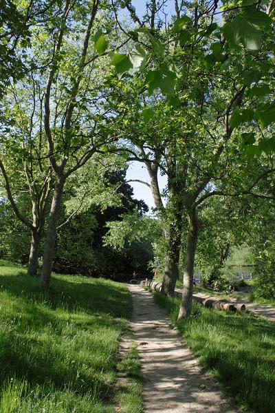 Tree lined footpath Hampstead Heath London
