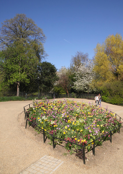 Spring flowers at Hyde Park London