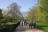 Spring Blossom at Hyde Park London