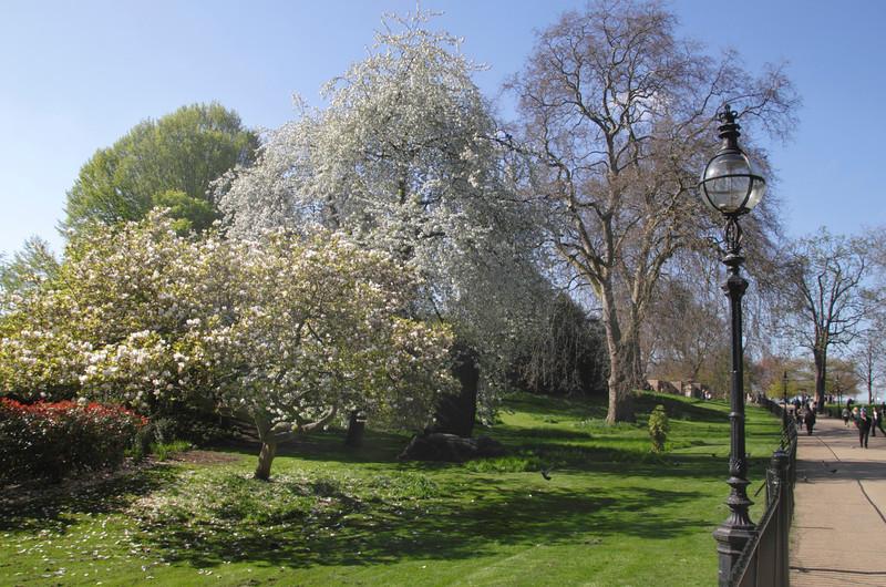 Spring Blossom at Hyde Park London