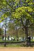 Sunbathing at Hyde Park London