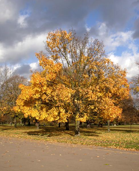 Autumn Tree Kensington Gardens London 2008