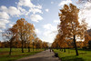 Autumn Trees Kensington Gardens London 2008
