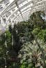 Interior of Temperate House Kew Gardens London