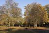 St James's Park London Autumn 2010
