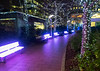London, Docklands, Christmas 2016