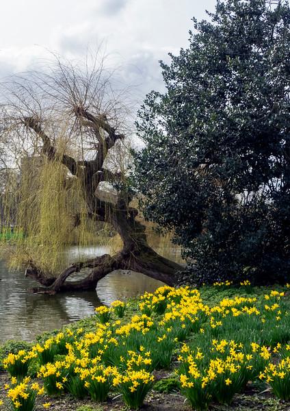 St James park, London, March 2017