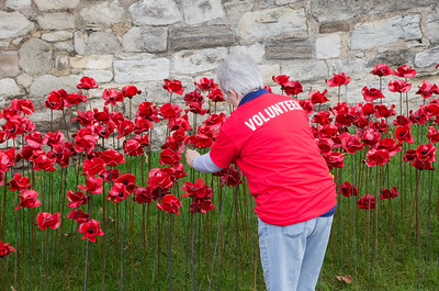 Every day since July, hundreds of volunteers installed these poppies