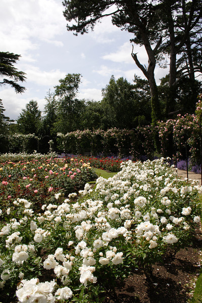 Rose Garden Blenheim Palace Oxfordshire