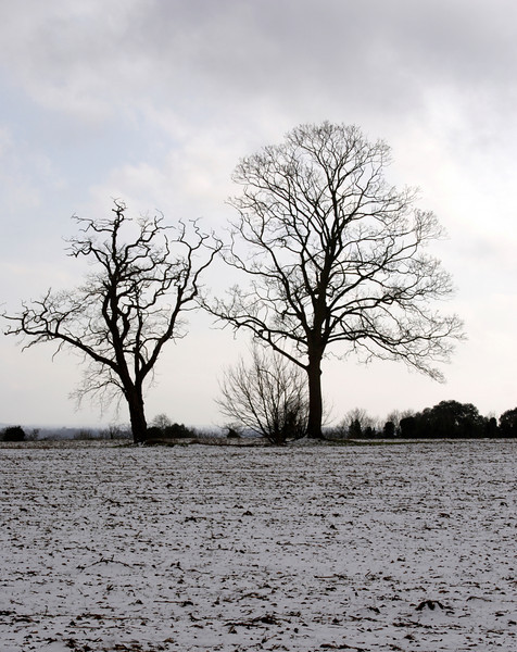 Trees in Oxfordshire Countryside at Shiplake Winter 2009