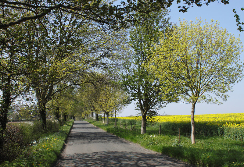 Spring country lane Shiplake Oxfordshire