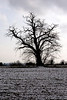 Tree in Oxfordshire Countryside at Shiplake Winter 2009