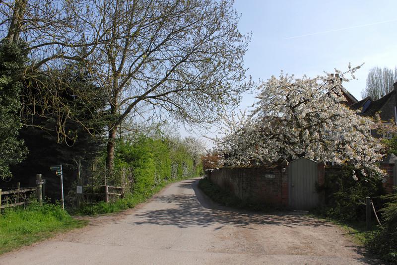 Spring blossom at Shiplake Oxfordshire