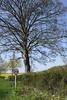 Spring tree Shiplake Oxfordshire
