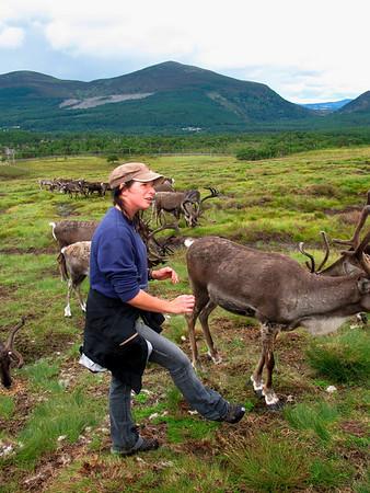 The Cairgorm Reindeer