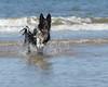 Sea Dogs :