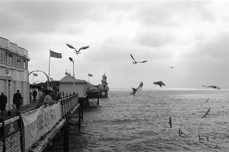 Seagulls feeding off Palace Pier Brighton