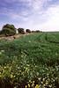 Countryside Dorset