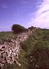 Stone wall Dorset