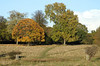Richmond Park Surrey