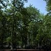 bluebell-woods-2