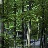 bluebell-woods-1
