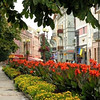 Ternopil Ukraine Flowers Downtown August