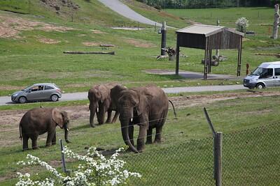 Passing the safari park near Kidderminster, 3 Elephants can be seen - 18/05/18