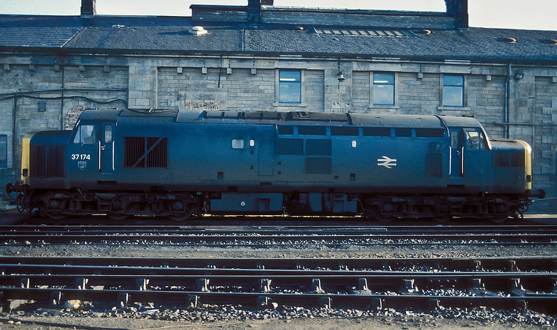 Sitting in front of the depot building at Motherwell on 15 November 1986 was 37174